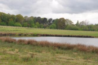 Bubbenhall Meadow