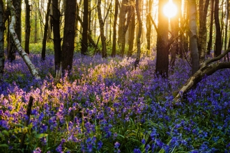 Photo comp 2018 Bluebell dawn Chris Day