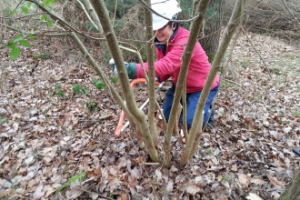 Man-Lan Adams, helping with coppicing as a trainee with the Dunsmore Living Landscape project.