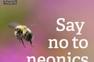 No to Neonics