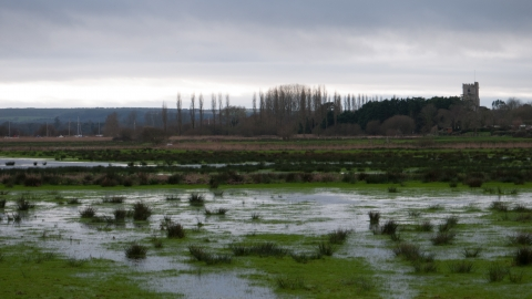 Coastal and floodplain grazing marsh