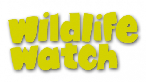 Wildlife Watch Logo (Yellow)