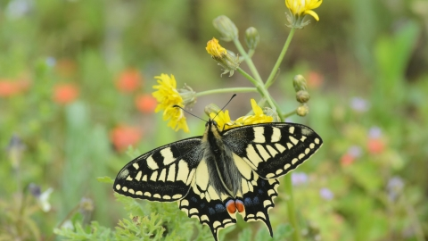 Swallowtail Butterfly. Terry Whittaker/2020VISION