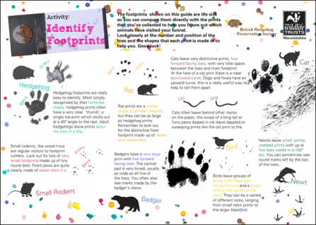 Hedgehog-How-To-Identify-Footprints-Thumbnail