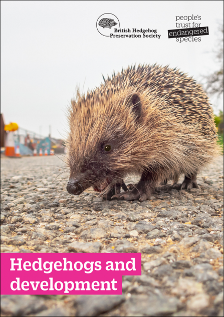 Hedgehogs-and-Development-Thumbnail