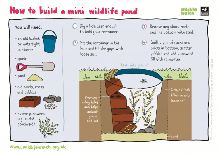 Make a mini wildlife pond