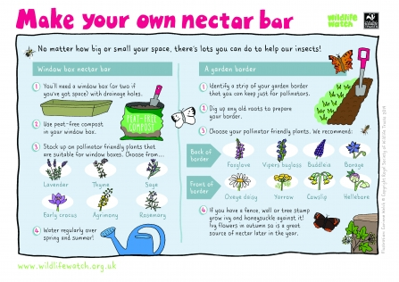 Make a nectar bar