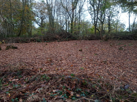 Coppiced area in Crackley Wood Jo Hands
