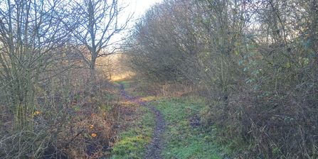 Whitacre Heath path Jo Hands