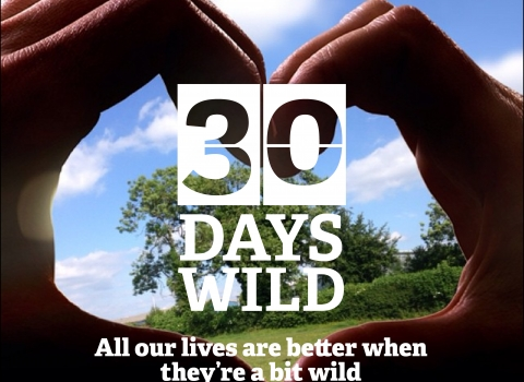 30 Days Wild 2017 heart and logo Emma Bradshaw