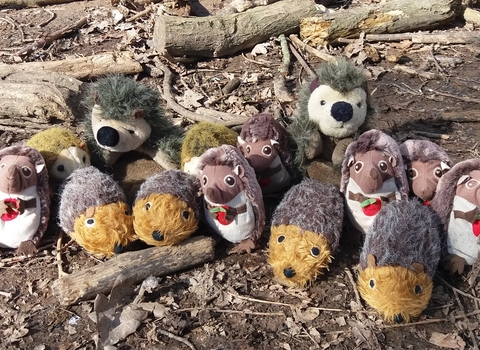 Lots of toy cuddly hedgehogs on a woodland floor.